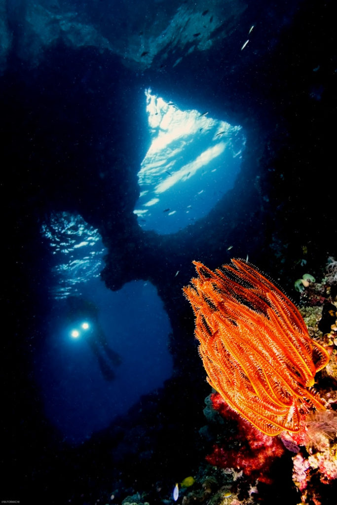 Servizi fotografici subacquei