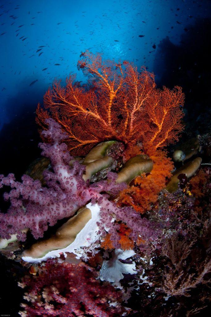 Servizi fotografici subacquei6